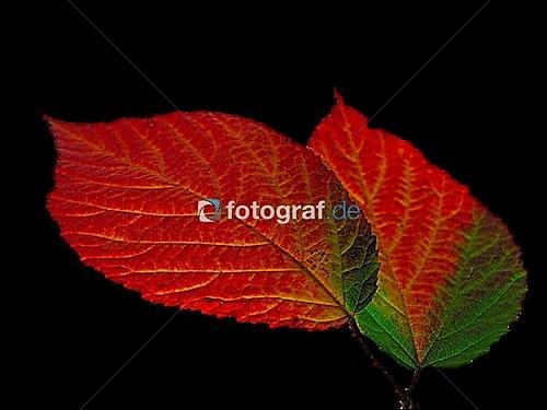 _-6Online Foto