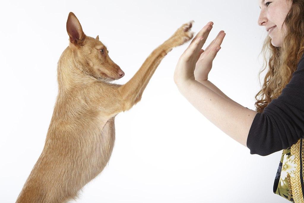 Hund, Laura, 30.05.130155