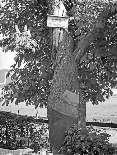 Ostpreußen (UNA_01648699.highres)