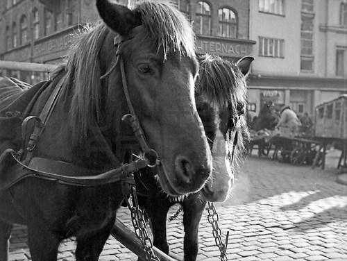 Ostpreußen (UNA_01651631.highres)