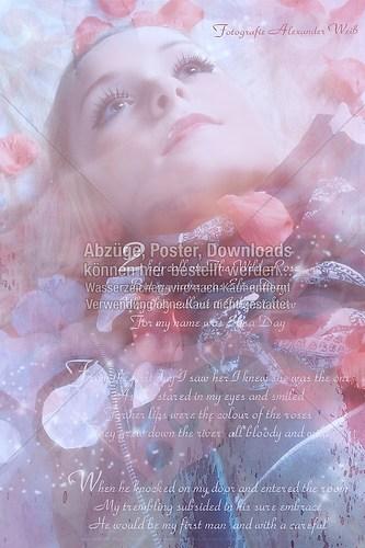 wild-rose-copyright
