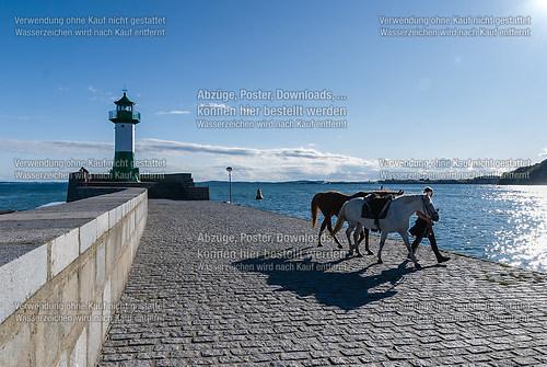 Mit Pferden auf der Sassnitzer Mole