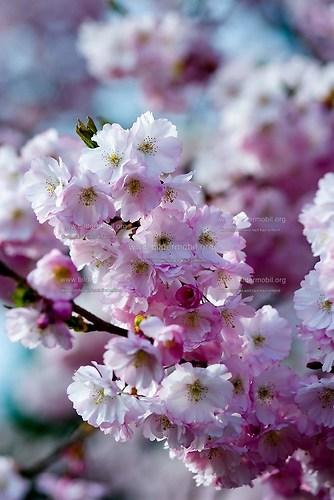 Florales_02