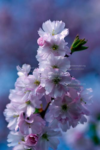 Florales_03