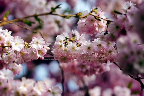 Florales_04
