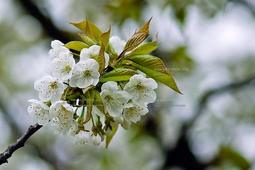 Florales_05