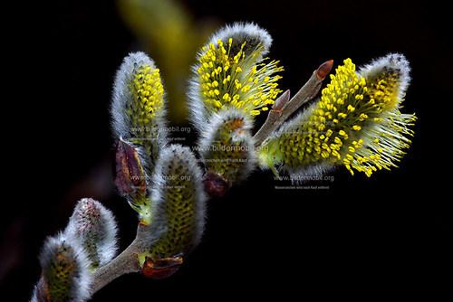 Florales_06