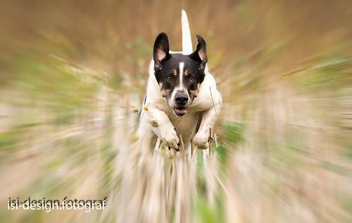 Hunde-6-Bearbeitet1