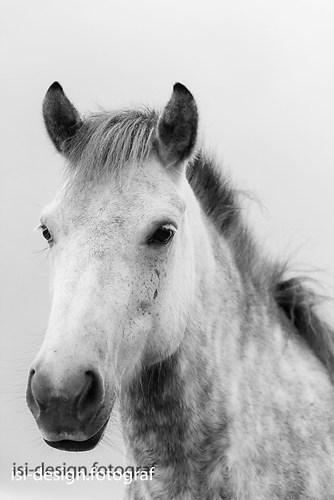 Pferde-17
