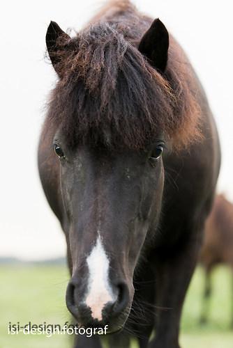 Pferde-18