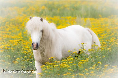 Pferde-21