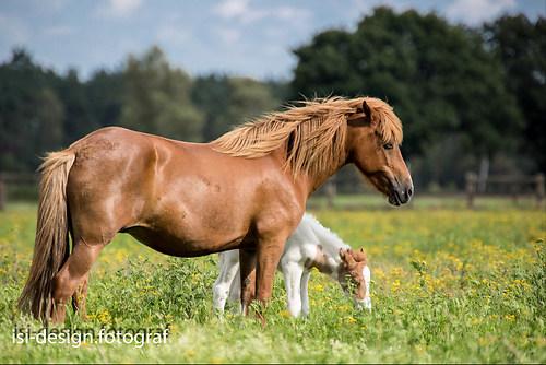 Pferde-22