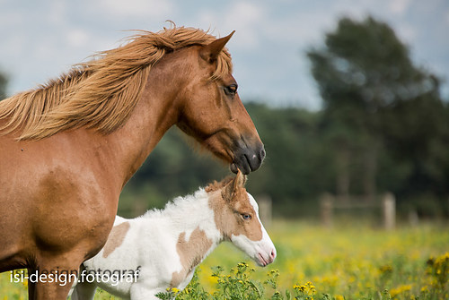 Pferde-23