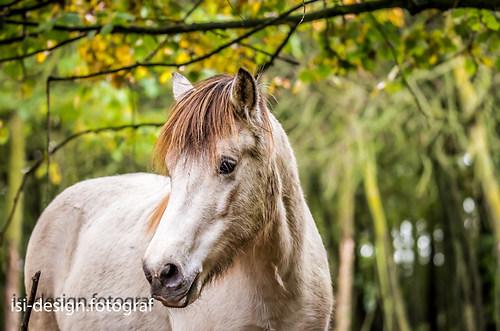 Pferde-30