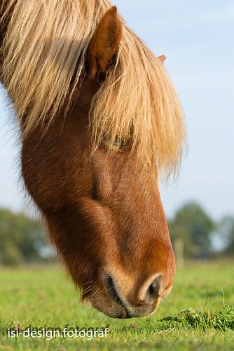 Pferde-37