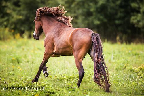 Pferde-38