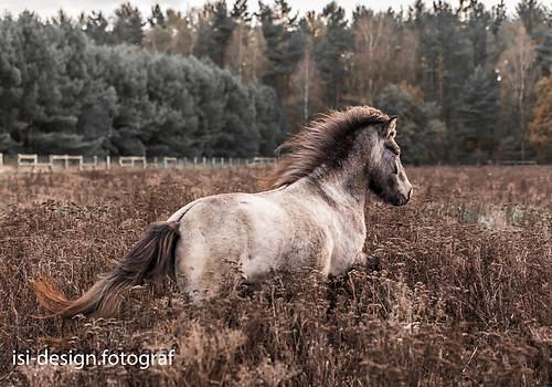 Pferde-46