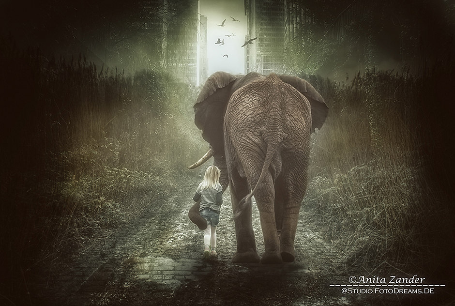 Last Days (elefant)