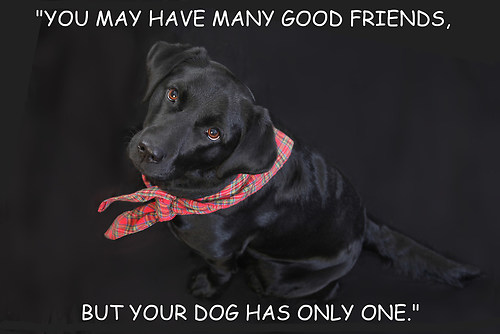 you have many good friends