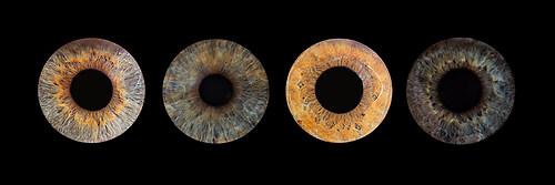 Auge-4er