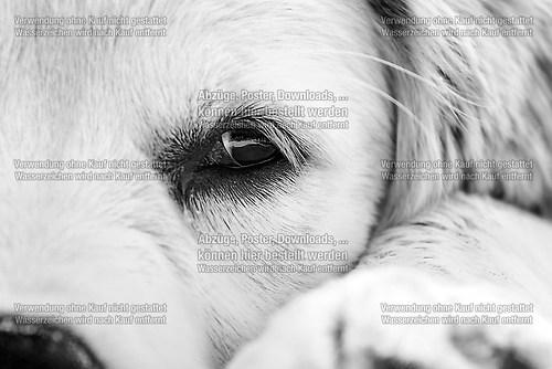 hundestrand-ostsee-97