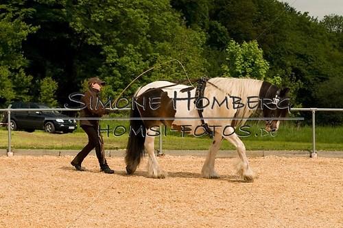 (c)SimoneHomberg_Ponyfest_2013_0091