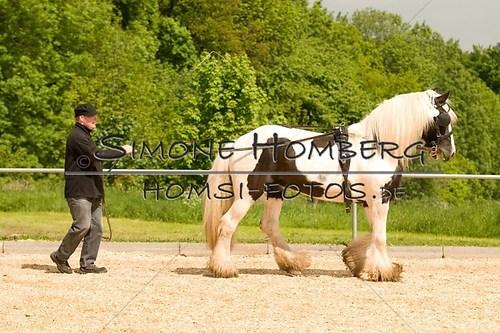 (c)SimoneHomberg_Ponyfest_2013_0103