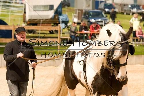 (c)SimoneHomberg_Ponyfest_2013_0113