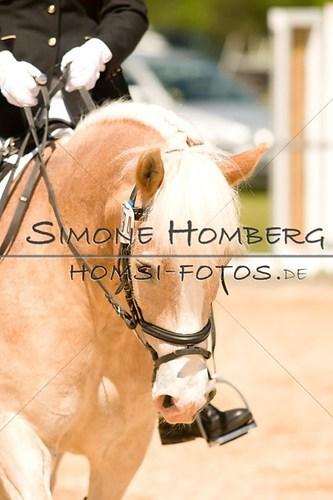 (c)SimoneHomberg_Ponyfest_2013_So_0164