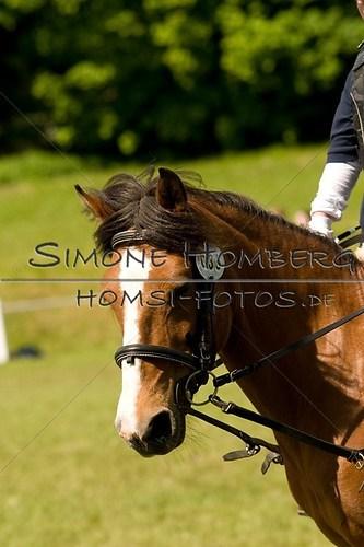 (c)SimoneHomberg_Ponyfest_2013_So_0074