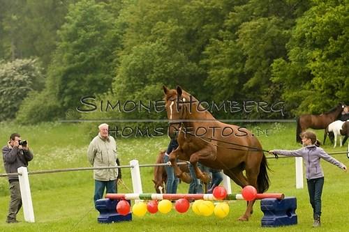 (c)SimoneHomberg_Ponyfest_2013_0463