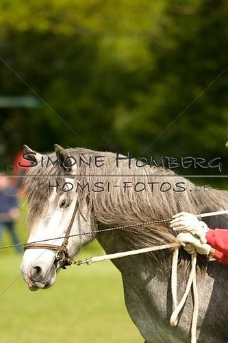 (c)SimoneHomberg_Ponyfest_2013_0018
