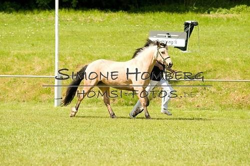 (c)SimoneHomberg_Ponyfest_2013_0043