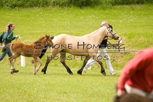 (c)SimoneHomberg_Ponyfest_2013_0159