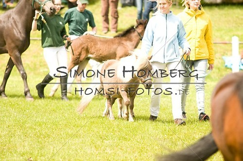 (c)SimoneHomberg_Ponyfest_2013_0171