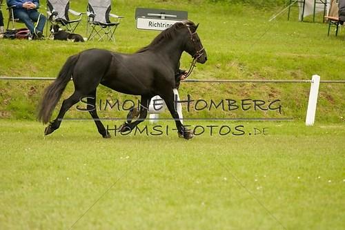 (c)SimoneHomberg_Ponyfest_2013_0196