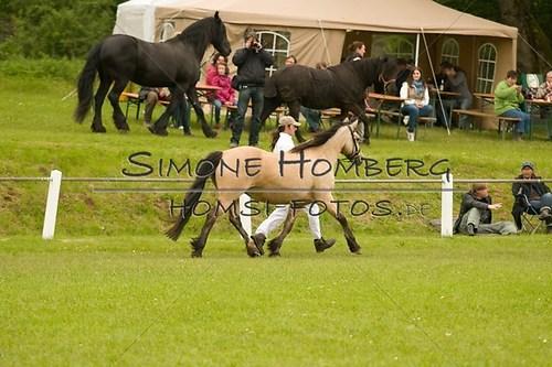 (c)SimoneHomberg_Ponyfest_2013_0219
