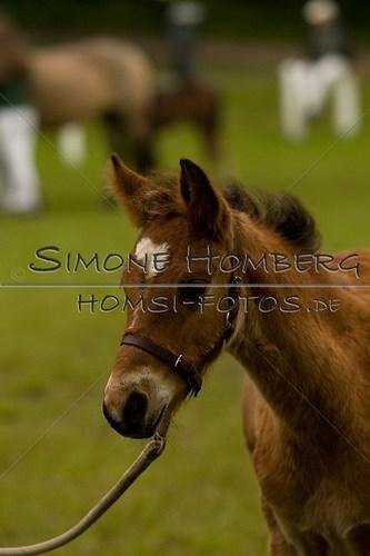 (c)SimoneHomberg_Ponyfest_2013_0454