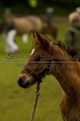 (c)SimoneHomberg_Ponyfest_2013_0455