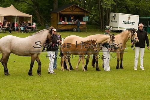 (c)SimoneHomberg_Ponyfest_2013_0476