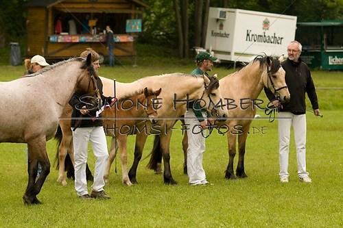 (c)SimoneHomberg_Ponyfest_2013_0477