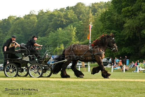 (c)SimoneHomberg_Ponyfest_Schauprogramm_20150606_0181