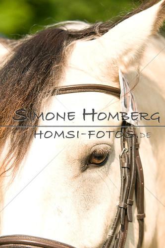 (c)SimoneHomberg_Ponyfest_Sa_20150606_0064
