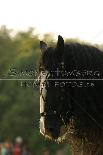 (c)SimoneHomberg_Ponyfest_Schauprogramm_20150606_0515