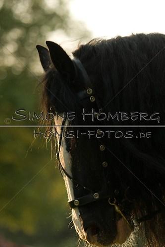 (c)SimoneHomberg_Ponyfest_Schauprogramm_20150606_0516