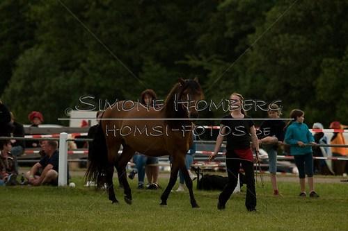 (c)SimoneHomberg_Ponyfest_Schauprogramm_20150606_0809