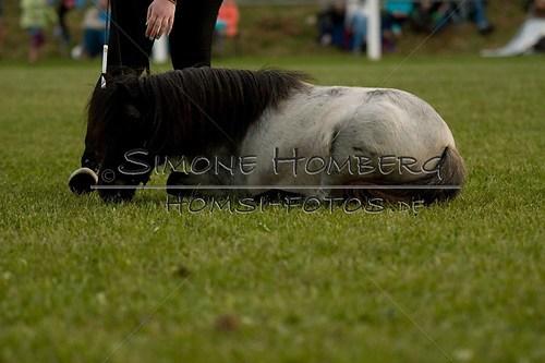 (c)SimoneHomberg_Ponyfest_Schauprogramm_20150606_0860