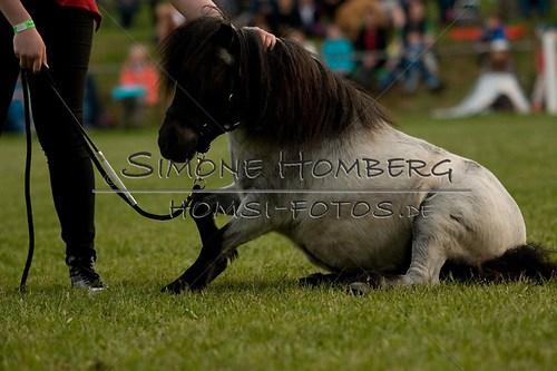 (c)SimoneHomberg_Ponyfest_Schauprogramm_20150606_0861