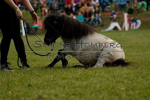 (c)SimoneHomberg_Ponyfest_Schauprogramm_20150606_0862