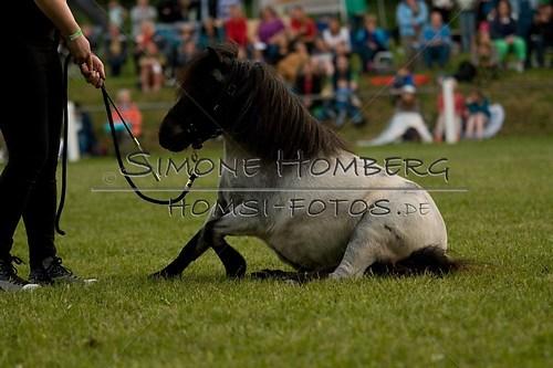 (c)SimoneHomberg_Ponyfest_Schauprogramm_20150606_0863